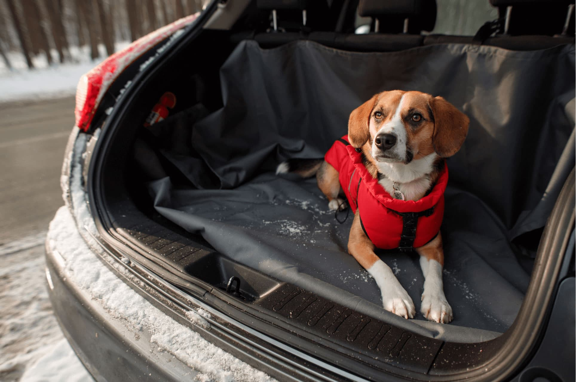 The Best Dog-Friendly Vehicles On The Market Right Now